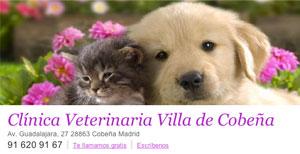 Clínica Veterinaria Villa de Cobeña